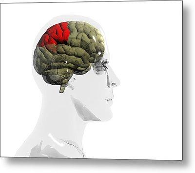 Human Brain, Parietal Lobe Metal Print by Christian Darkin