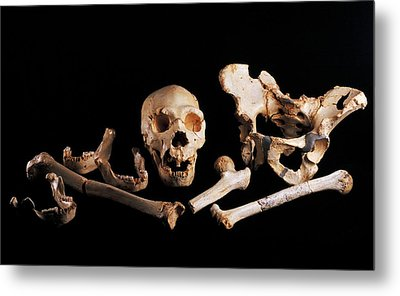 Human Fossils, Sima De Los Huesos Metal Print by Javier Truebamsf