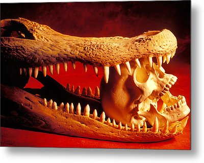 Human Skull  Alligator Skull Metal Print by Garry Gay