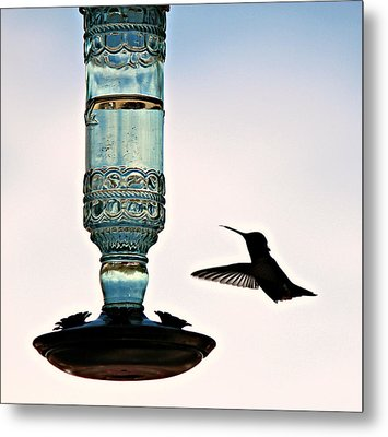 Metal Print featuring the photograph Hummer At The Feeder by Jo Sheehan