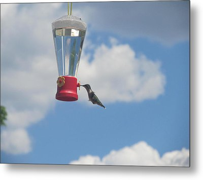 Metal Print featuring the photograph Just A Hummingbird by Tina M Wenger