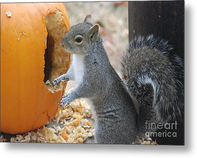 Metal Print featuring the photograph Hungry Squirrel by Mark McReynolds