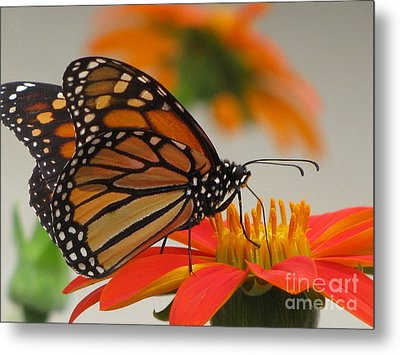Metal Print featuring the photograph Hungry by Tina Marie