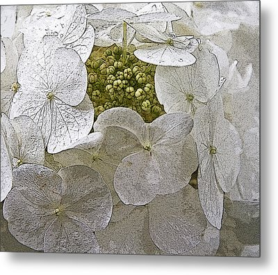 Metal Print featuring the photograph Hydrangea by Michael Friedman