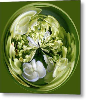 Hydrangea Orb Metal Print