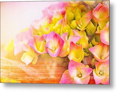 Hydrangeas In Bloom Metal Print by Elaine Manley