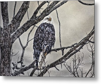 I Am Cold Metal Print by Gary Smith