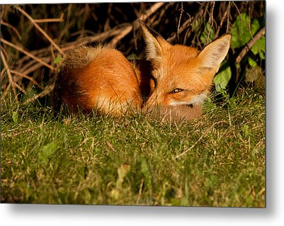 I Can See You Metal Print by Mircea Costina Photography