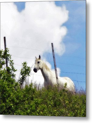 Metal Print featuring the photograph I Dreamt Of A White Horse by Michael Dohnalek