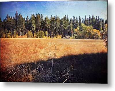 I Roam Metal Print by Laurie Search