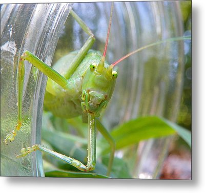 I See You Metal Print by Chad and Stacey Hall