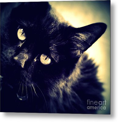 I Want Your Love Metal Print