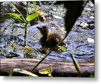 I Wish I Could Fly Metal Print by Don Mann
