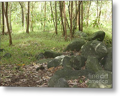 Iao Valley Forest Walk Metal Print by Terri Thompson