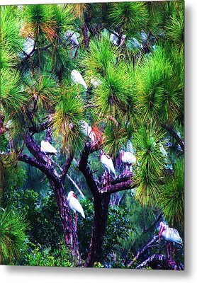 Ibis-gone To Roost-2 Metal Print by Joy Braverman