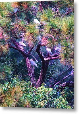 Ibis-gone To Roost Metal Print by Joy Braverman
