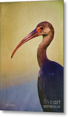Ibis Nature Pose Metal Print by Deborah Benoit