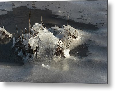Ice And Salt Marsh Grasses Metal Print by George Grall