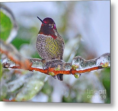 Metal Print featuring the photograph Ice Cold Hummer by Jack Moskovita