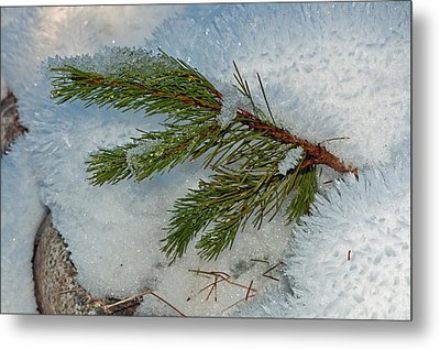Metal Print featuring the photograph Ice Crystals And Pine Needles by Tikvah's Hope