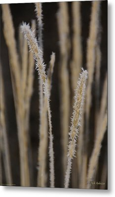 Ice Crystals On Tall Grass Metal Print by Mick Anderson