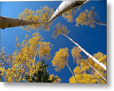 Iconic Aspen Photo Metal Print by Stephen  Johnson