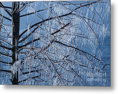 Metal Print featuring the photograph Icy Tree by Charles Lupica