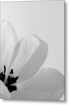 Idem Metal Print by Julia Wilcox
