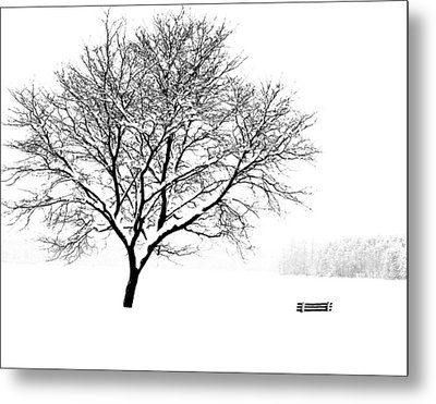I'll Cover You Friend Metal Print by Jim McDonald Photography