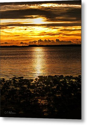 Illuminated Metal Print by Christopher Holmes