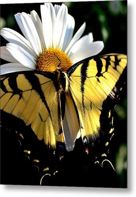 Metal Print featuring the photograph I'm A Beauty Fly by Tanya Tanski