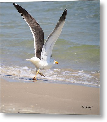 Im Out Of Here - Lesser Black-backed Gull Metal Print by Roena King