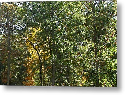 Metal Print featuring the photograph Image Of Fall by Pamela Hyde Wilson