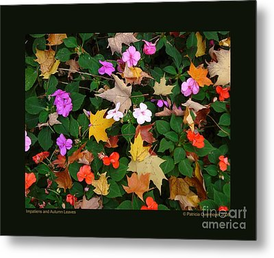 Impatiens And Autumn Leaves Metal Print by Patricia Overmoyer