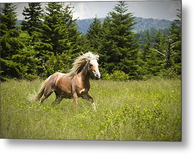 Metal Print featuring the photograph In A Hurry by Carrie Cranwill
