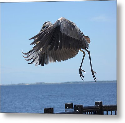 In Flight 2 Metal Print