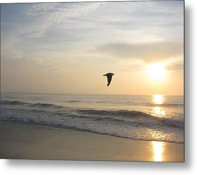 In Flight Metal Print by Jenna Mackay