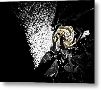In Harmony Metal Print by Jessica Brawley