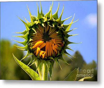 In The Beginning  Metal Print by Tammy Cantrell