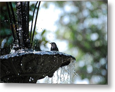 Metal Print featuring the photograph In The Cool Of The Morning #1 by Linda Cox