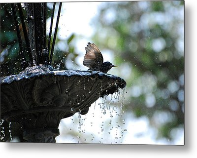 Metal Print featuring the photograph In The Cool Of The Morning #2 by Linda Cox