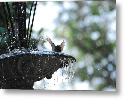 Metal Print featuring the photograph In The Cool Of The Morning #3 by Linda Cox