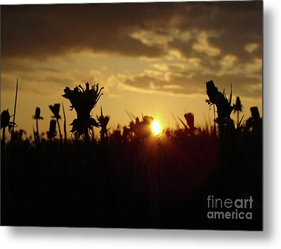 Metal Print featuring the photograph In The Middle Of Grass by Bruno Santoro