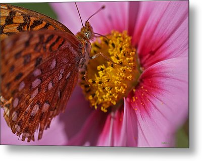 In The Pink Metal Print by Mitch Shindelbower