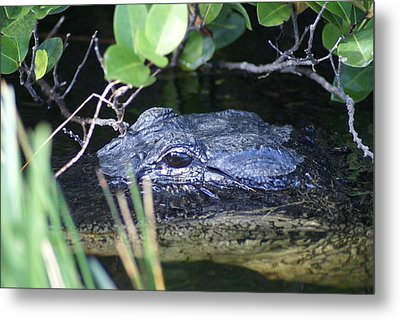 Metal Print featuring the photograph In The Swamp by Jerry Cahill