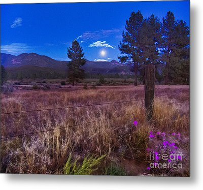 In The Twilight Metal Print by Rhonda Strickland