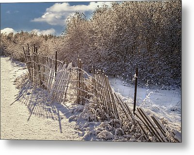 Metal Print featuring the photograph In Winter's Chill by Yelena Rozov