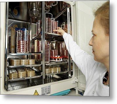 Incubating Bacteria Metal Print by Tek Image
