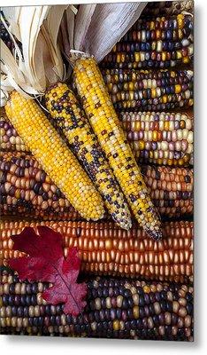 Indian Corn Metal Print by Garry Gay