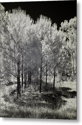 Infrared Trees Metal Print by Stavros Argyropoulos